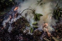 燃烧的叶子&烟2 免版税库存照片