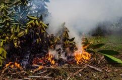 燃烧的叶子&烟8 库存图片