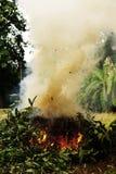 燃烧的叶子 免版税图库摄影