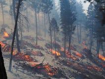 燃烧的堆在森林里 图库摄影