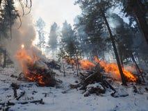 燃烧的森林燃料 库存图片