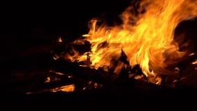 燃烧的火 ?? 关闭烧在黑背景,慢动作的火焰 影视素材