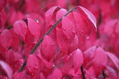 燃烧的矮树丛在雨中 免版税图库摄影