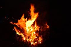 燃烧的矮树丛夜 图库摄影