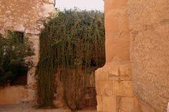 燃烧的矮树丛,西奈半岛,埃及 库存照片