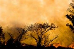 燃烧的矮树丛 免版税图库摄影