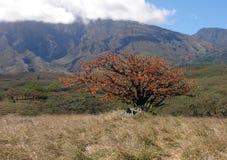 燃烧的矮树丛 免版税库存照片