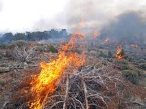 燃烧的矮树丛 库存照片