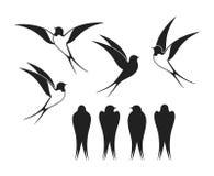 燕子商标 在白色backgroun的被隔绝的燕子 双翼飞机 库存例证