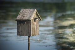 燕子嵌套在鸟房子里 库存图片