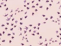 燕子抽象飞行  库存照片