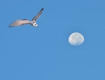 燕鸥 库存图片