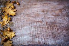 燕麦、橡子和秋天边界在老木backgroun离开 库存图片