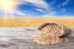 燕麦五谷在自然背景的 免版税库存图片