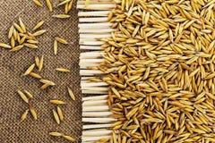 燕麦五谷在黄麻背景的  库存照片