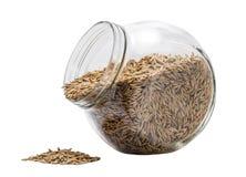 燕麦五谷脱离 免版税库存照片