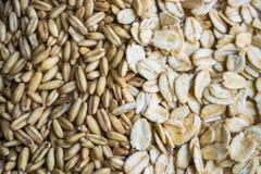 燕麦剥落,燕麦五谷 免版税库存照片