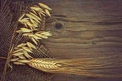燕麦和黑麦茎  库存图片