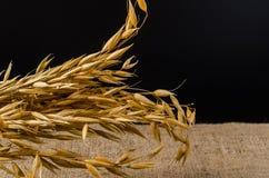 燕麦在麻袋布的谷粒 库存图片