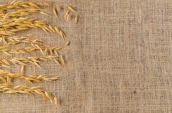 燕麦在麻袋布的谷粒 免版税图库摄影