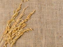 燕麦在麻袋布的谷粒 库存照片