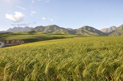 燕麦域 库存照片