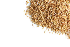 燕麦少量 免版税图库摄影