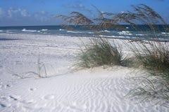 燕麦海运海浪 库存照片