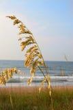 燕麦海运 库存图片