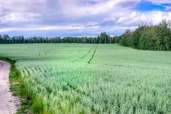 燕麦的域 库存照片