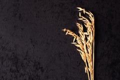 燕麦的耳朵在黑色的 免版税库存照片