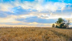 燕麦的领域反对多云天空的在日落 库存照片