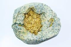 燕麦种子在袋子的 准备播种燕麦五谷  免版税图库摄影