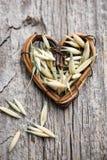 燕麦种子 库存照片