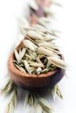 燕麦种子 图库摄影