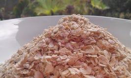 燕麦谷物 免版税库存照片