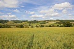 燕麦领域和风景补缀品风景 库存照片