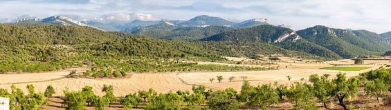 燕麦领域在Ports de Besseit 免版税库存图片