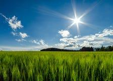 燕麦领域 免版税库存图片
