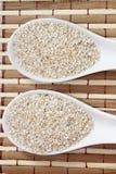 燕麦麸皮 免版税库存照片