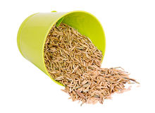燕麦,种子 库存图片