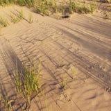 爪子打印沙子 免版税库存照片