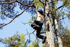 爬上在森林关闭的树的年轻人 库存图片
