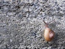 爬上在石头的蜗牛铺磁砖了墙壁 免版税库存图片
