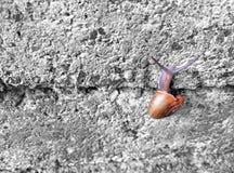 爬上在石头的蜗牛铺磁砖了墙壁 库存图片