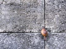 爬上在石头的蜗牛铺磁砖了墙壁 库存照片