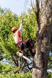 爬上树的专业树去膜剂 免版税库存照片