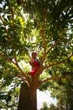 爬上树的十几岁的男孩 免版税库存照片