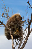 爬上树 免版税图库摄影