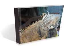 爬行动物书在徒步旅行队公园的 库存图片